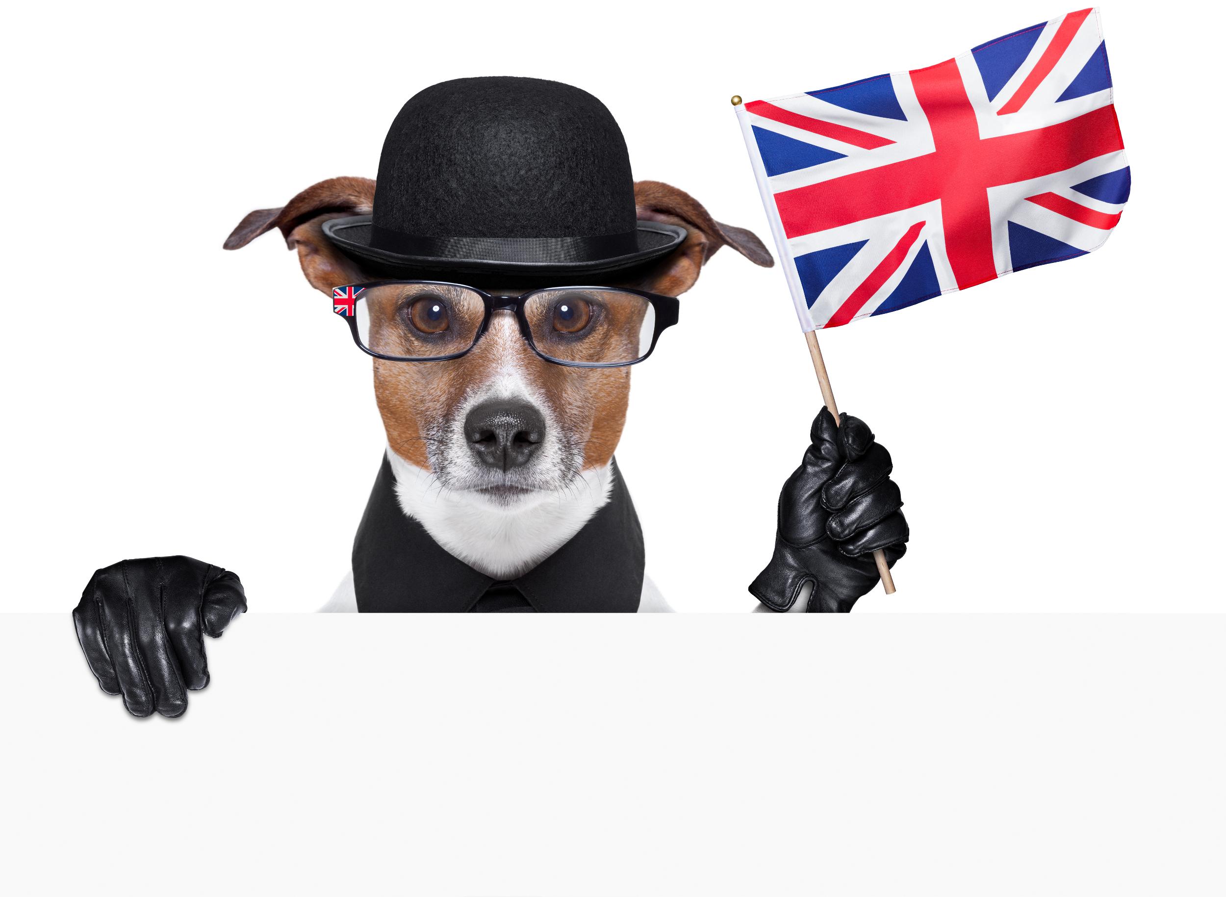 angielskie wyrażenia związane z psem