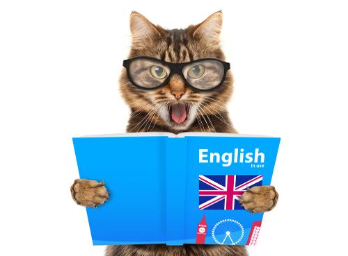 kot w języku angielskim