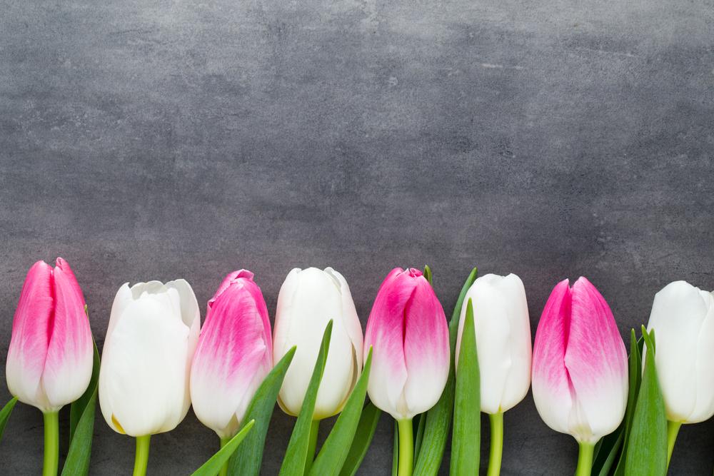 kwiaty po angielsku