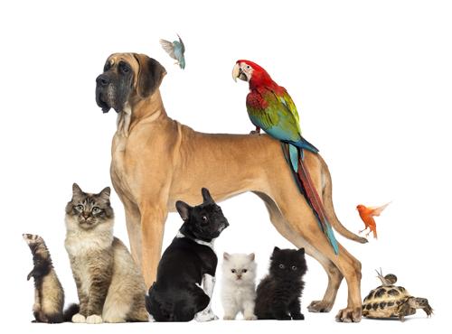 zwierzęta domowe po angielsku